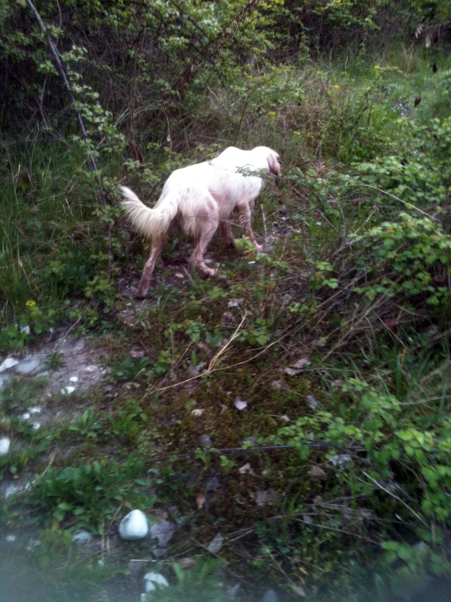 La Conservazione E Lallenamento Del Cane