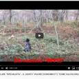 """Clicca sulle Anteprime per Guardare i Video: È davvero molto bello ed entusiasmante per un Appassionato del <<Cane da Ferma>> poter """"osservare"""" la miriade di Video Registrazioni <<OPPIS>> prettamente rivolte..."""